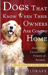 Dogs That Known When Their Owners Are Coming Home