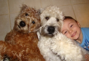 Soft-Coated Wheaten Terriers and Human Friend